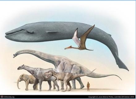Blue Whale Animal Comparison